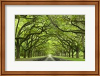 Framed Oaks Avenue 1