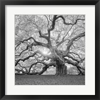 Framed Tree Square BW 2