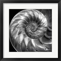 Framed Nautilus 4