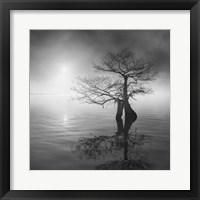 Framed Sunrise Fog