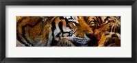 Framed Tigers Sleep