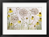 Framed Alliums and Heleniums