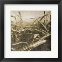 Framed Wheat Fields