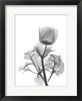 Framed Lonely Anemone