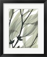 Framed Eucalyptus Safari