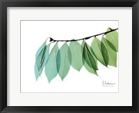 Framed Golden Camelia Leaf