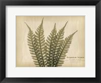 Framed Parchment Fern 2