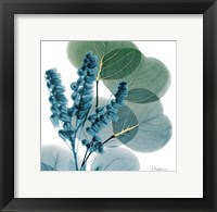 Framed Golden Lilly Of Eucalyptus