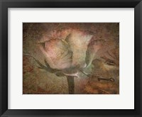 Framed Rose Faith