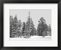 Framed Forest Freeze BW