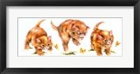 Framed Kitten And Butterfly