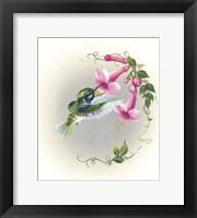 Framed Hummingbird With Trumpet Flowers 2