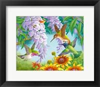 Framed Hummingbirds