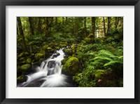 Framed Moment In Nature