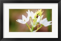 Framed Bug On Flowers