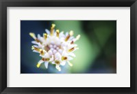 Framed Macro Flower Head