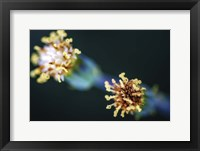 Framed Macro Flower Heads