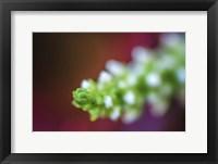 Framed Macro Plant Bud