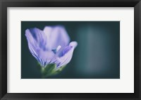 Framed Macro Purple Flower