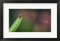 Framed Red And Green Bug