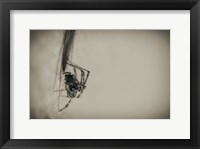 Framed Spider 1