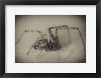Framed Spider 2