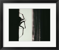 Framed Spider 3