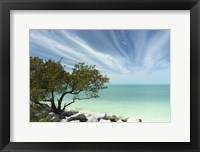 Framed Key West Tree 1