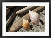 Framed Bright Two Shells Driftwood