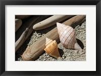Framed Bright Two Shells Driftwood