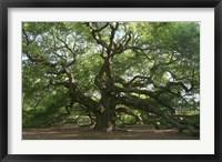 Framed Angel Oak 9098