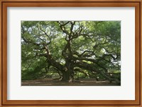 Framed Angel Oak 9098