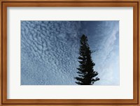 Framed Lone Cedar Sky