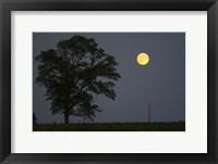 Framed Moonrise Lone Tree