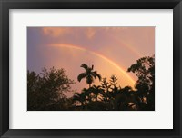 Framed Rainbow Palms