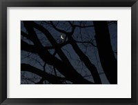 Framed Silhouette Branches Moon Venus