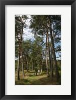 Framed Pine Path Vertical