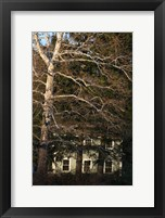 Framed Sycamore House Vertical