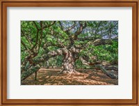 Framed Angel Oak