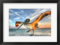 Framed Dancing Pelican