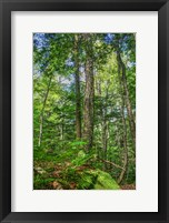 Framed Forest Vertical