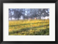 Framed Paddock Web