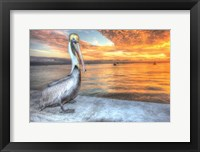 Framed Pelican And Fire Sky