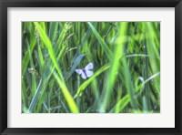 Framed Splendor In The Grass