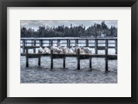 Framed White Pelicans And Piers