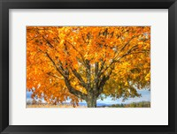 Framed Autumn Yellow Tree And Gunks