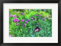 Framed Garden Purple Tulips