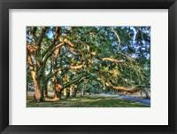 Framed Jeckel Island Treeline