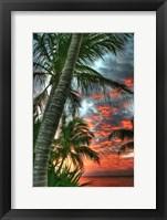 Framed Key West Palm Sunrise Vertical