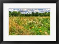 Framed Late Summer Meadow
